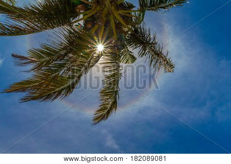 Coconut palm tree with shining sun, halo and sun rays