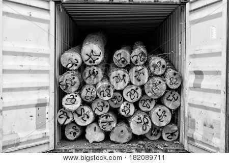 Maritime transportation industry. Wooden logs loading of the container.