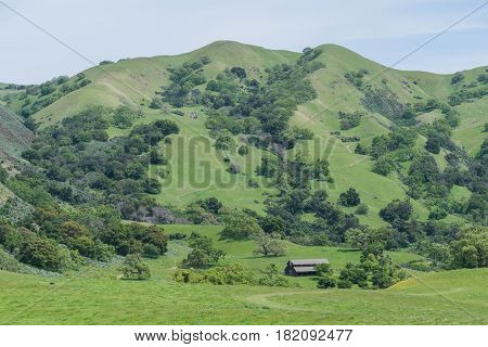 Barn Below: lush hills, dotted with trees, some Yellow Mustard Flowers,  and a barn down below