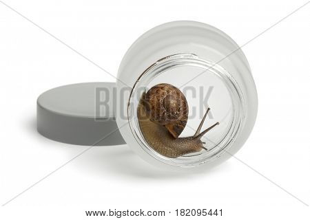 Snail in a face cream pot producing slime