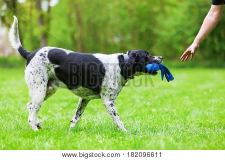 Mixed Breed Dog With A Toy In The Snout