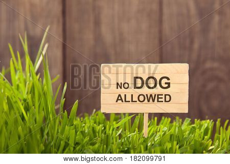 Signboard no dog allowed on Grass background of wood planks, Fresh green lawn near rustic grunge fence