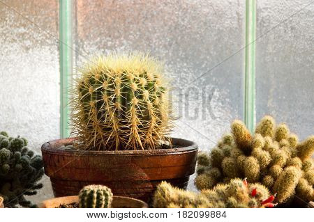 Home Cactus Collection