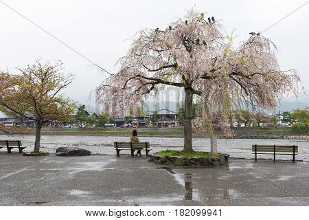 Asian lady sit on park bench under pink cherry blosson treeZsakura) at river side lonely concept Loneliness solitary concept