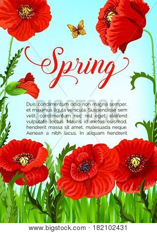 Spring holidays vector greeting card design of blooming poppy flowers field. Template for springtime seasonal quotes with blooming nature and flourish green field of red flowers blossoms and buds