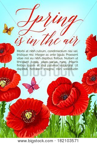Spring is in the Air greeting quote poster design with vector poppy flowers and butterflies on green grass field. Springtime blooming nature and bunches of flourish red flowers and blossom buds