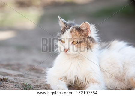 Red Cat With Brown Eyes Lying On The Ground