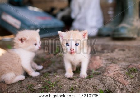Two Little Funny Kitten. One Of Them Shows The Pull Tab