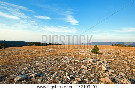 Lone tree among rocks on ridge in early morning light above Lost Water Canyon in the Pryor Mountains Wild Horse Range in Wyoming USA