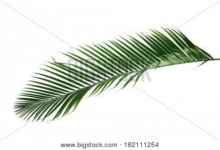 Palm leaf on white background