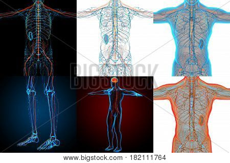 3D Rendering Medical Illustration Of The Nerve System