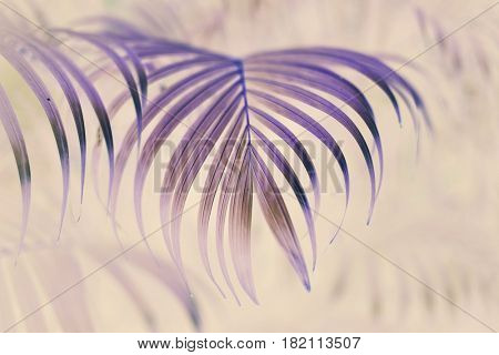 Plant nature growth tropical tree leaf