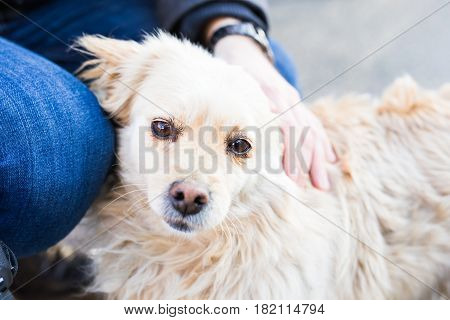 owner caressing gently her dog. Male hand patting white dog head