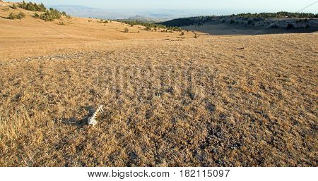 Dry Bones On Sykes Ridge Above The Teacup Bowl In The Pryor Mountain Wild Horse Range Overlooking Th