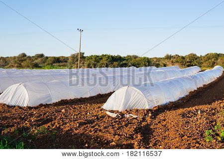 many greenhouses in country garden in spring