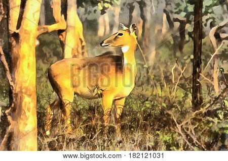 Colorful painting portrait of Chital, cheetal Axis axis