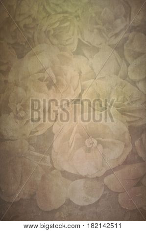 Background of faded Vintage Textured Camellia flowers