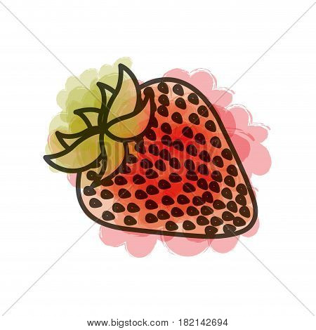 watercolor drawing of strawberry fruit vector illustration
