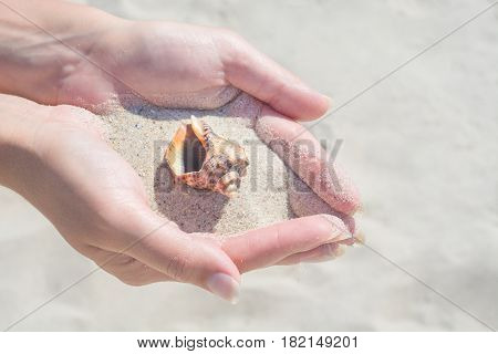 Seashell In The Young Wooman's Hands