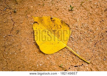 Drought. Yellow leaf with black specks lies on dry ground.