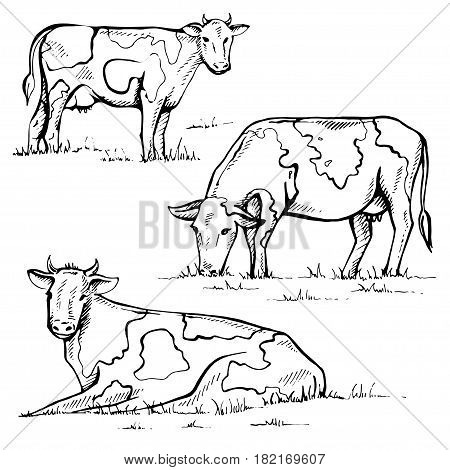 Hand drawn cow on white background. Set of vector animals.
