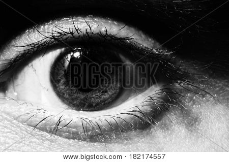 Black and white Male eye macro. Wide open surprised male look