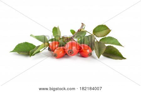Rose hip isolated on a white background