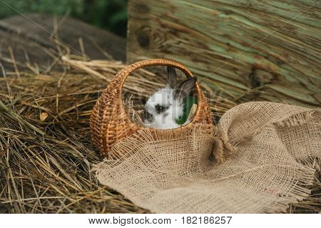 Cute rabbit small easter bunny domestic pet with long ears and fluffy fur coat sitting in wicker basket with sackcloth on natural hay on blurred wooden background
