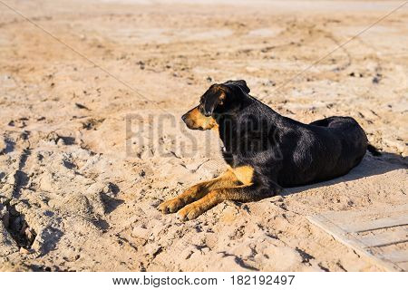 A dog lying on sand at the beach, with sad eyes and wet fur. poor solitude pet. Lonely dog waiting for its owner