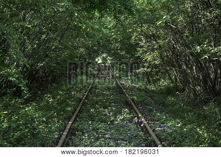 Lost old Tracks in a green forrest