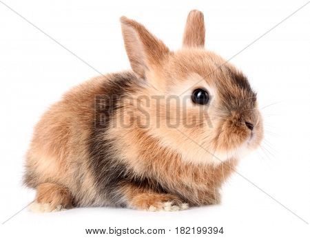 Rabbit baby bunny isolated on white background