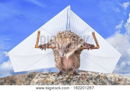 A funny hedgehog prepares to fly on a paper steamer