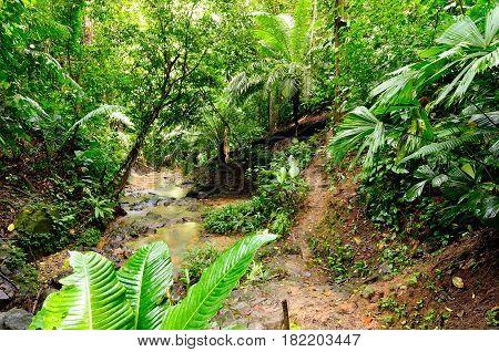 Colombia wild Darien jungle of the Caribbean sea near Capurgana resort and Panama border. Central America