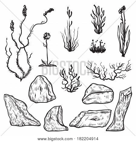 North tundra plants and icebergs. Black and white design elements in sketch style. Vintage hand drawn vector illustration