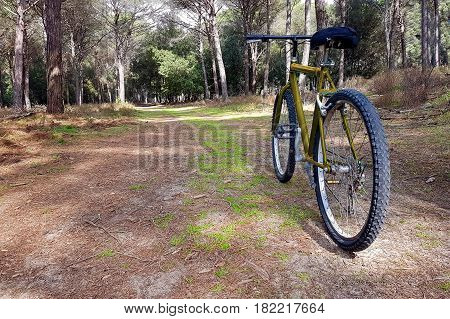 A Bike Ride In The Park With Trees