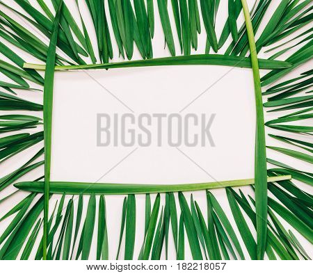 floral rectangular frame of green leaves on a white background with space for text top view