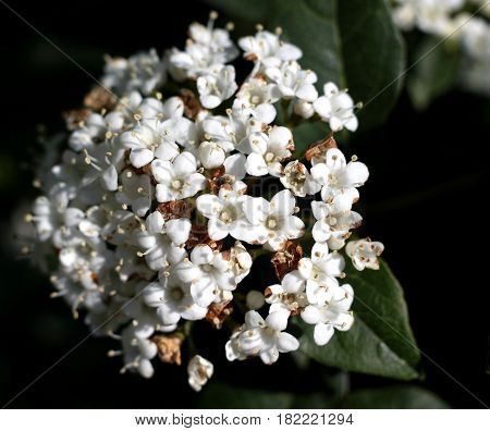 a close up of beautiful white flowers