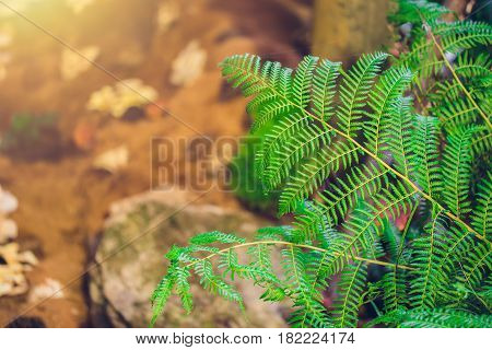 Nature Green Fern In Rain Forest With Sun Light