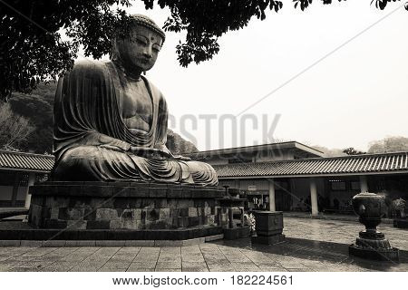 Historical Great Buddha of Kamakura statue at Kotoku-in in Japan