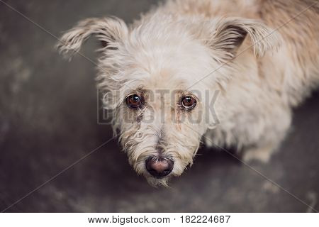 The Cute Dog With Looking Eye Contact