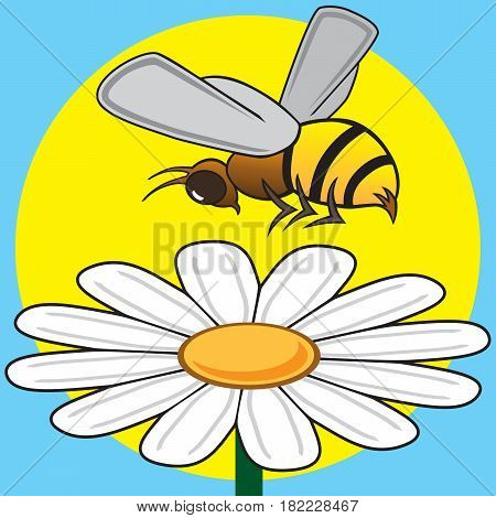Busy bee is hovering over a daisy