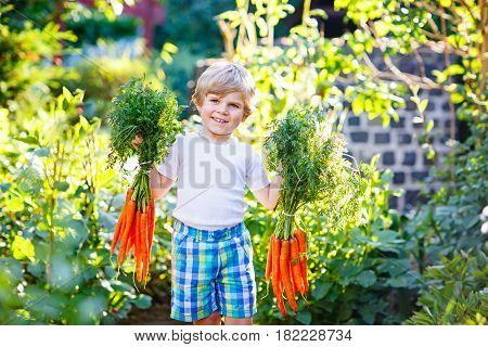 Happy smiling kid boy with carrots in domestic garden of farm. child gardening outdoors. Healthy organic vegetables for kids. Boy having fun with farming and helping