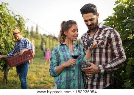 Working people harvesting grapes at winegrower vineyard