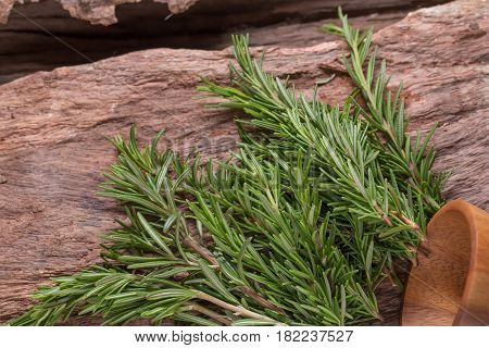 rosemary Herbs and Medicinal herbs. Organic healing herbs. fresh rosemary bunch rosemary on wooden background.