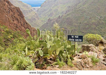 Landscapes in Barranco de Guayadeque Gran Canaria