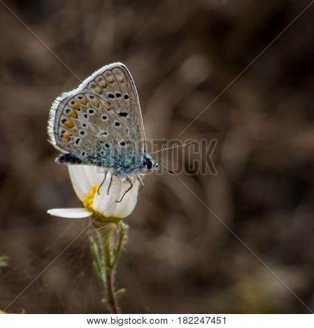 Butterfly on flower near La Geria, Lanzarote