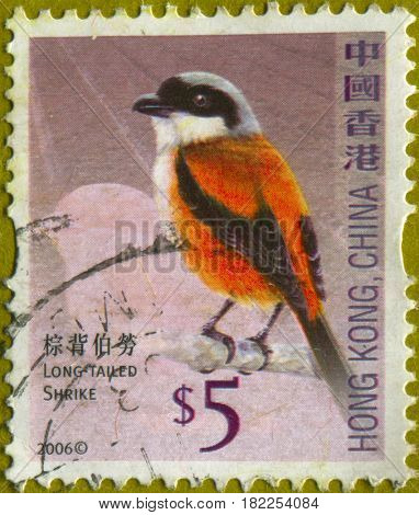 GOMEL, BELARUS, APRIL 18, 2017. Stamp printed in Hong Kong, China shows image of  The Long-tailed Shrike, circa 2006.