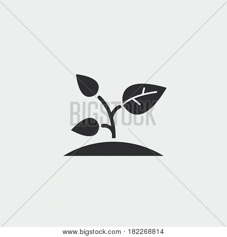 sprout icon isolated on grey background .