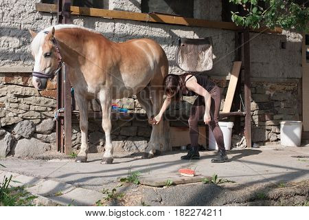 Young Woman Brushing Her Horse