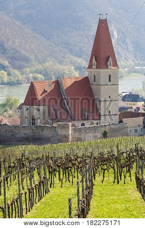 Church of the Assumption of the Virgin Mary (german: Wehrkirche Maria Himmelfahrt) in village of Weissenkirchen-in-der-Wachau with vineyards in the foreground. District of Krems-Land, Lower Austria.